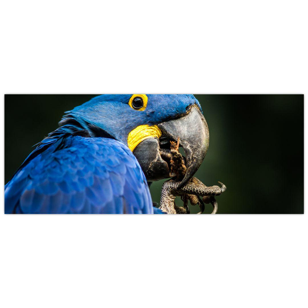 Obraz papouška (V020714V10040)