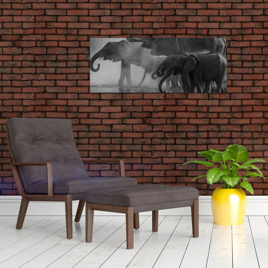 Obraz slonů - černobílý (V021575V10040)