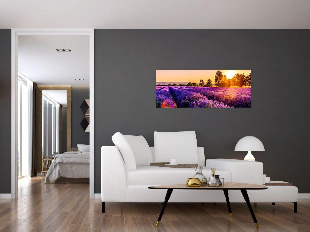 Obraz levandulového pole, Provence (V021590V10040)