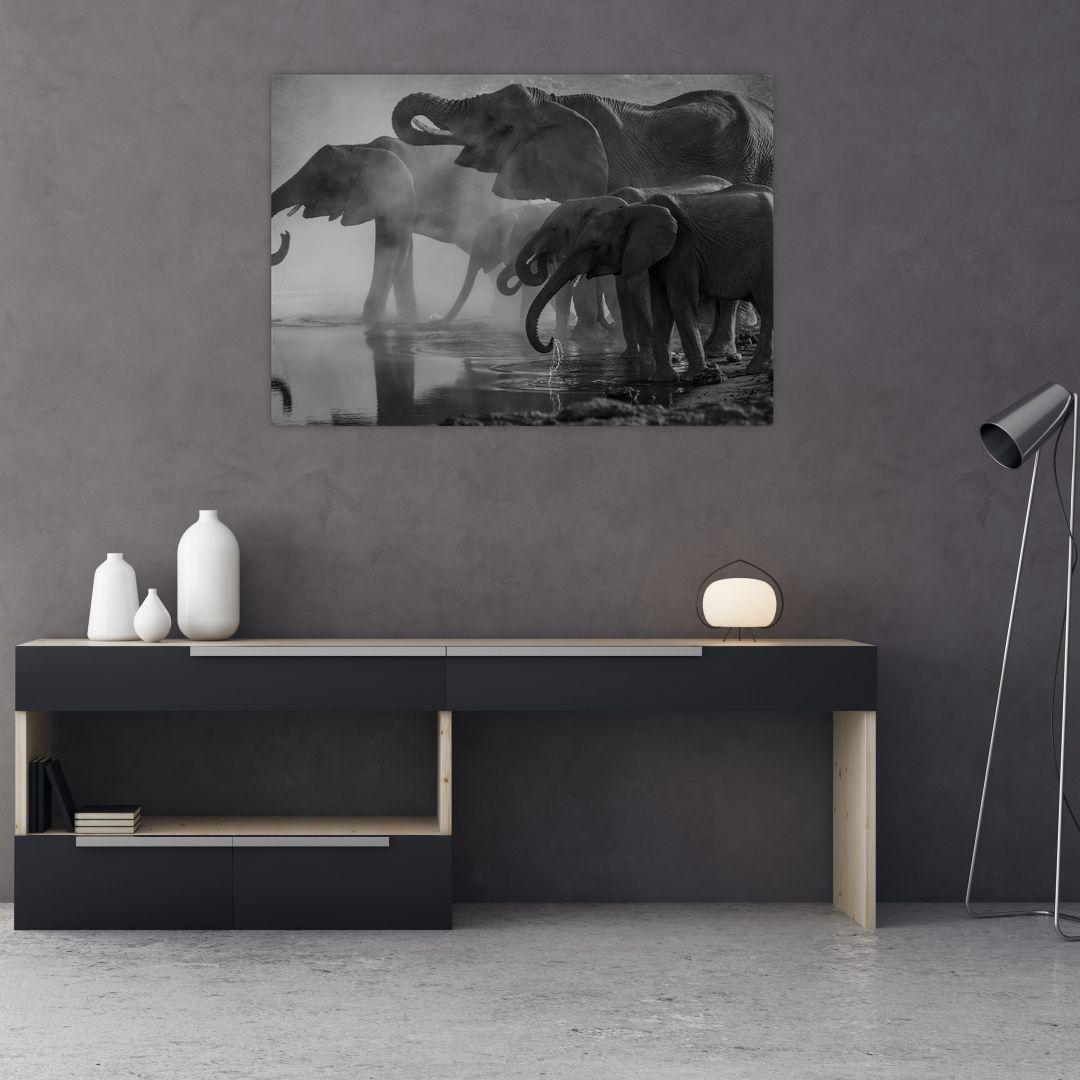 Obraz slonů - černobílý (V021575V10070)