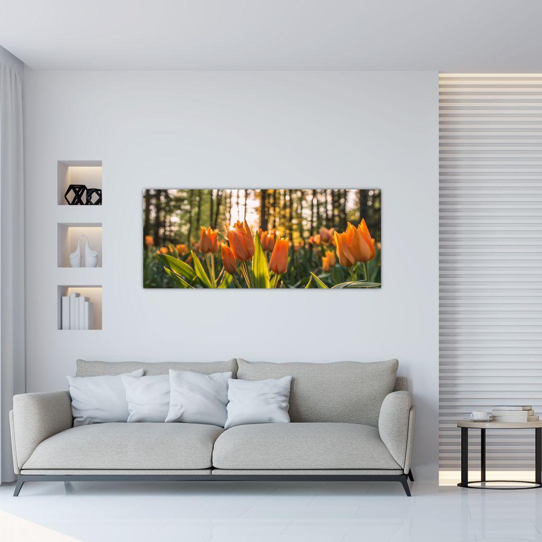 Obraz - kvety tulipánov (V020195V12050)