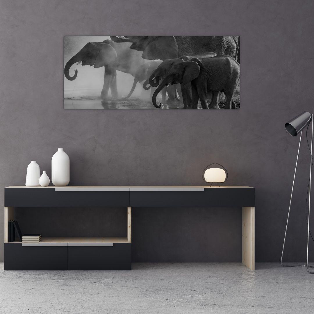 Obraz slonů - černobílý (V021575V12050)