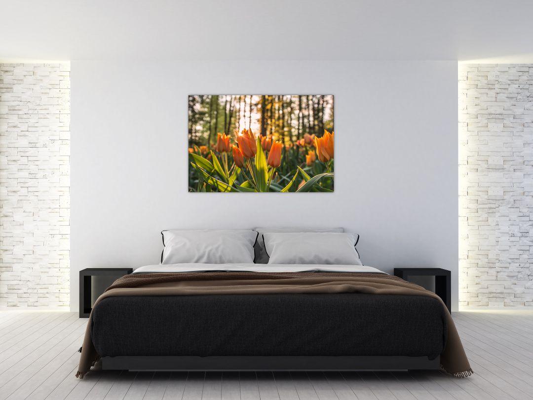 Obraz - kvety tulipánov (V020195V12080)