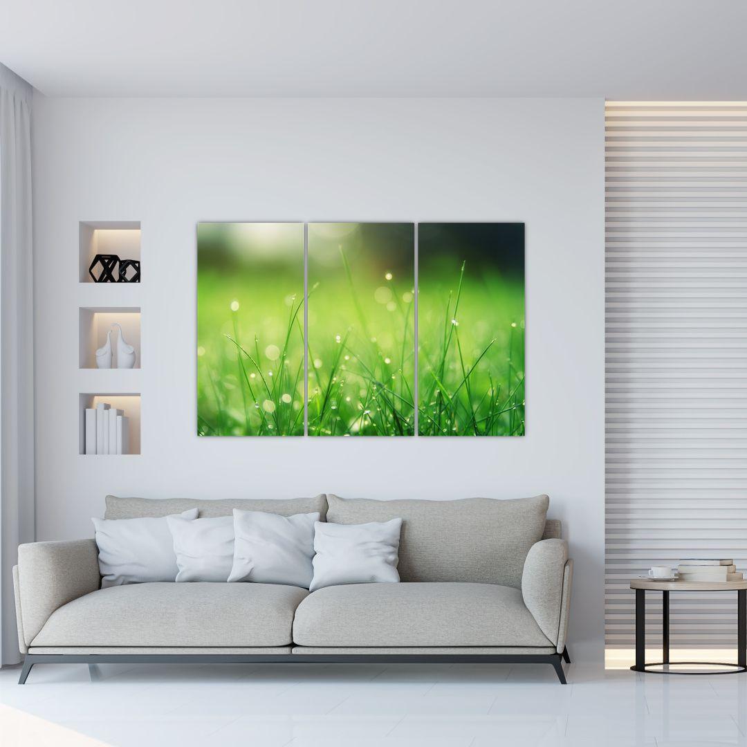 Obraz - rosa na tráve (V020169V120803PCS)