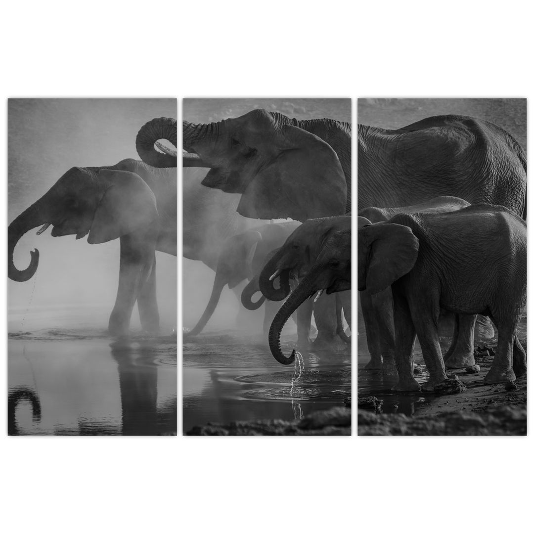 Obraz slonů - černobílý (V021575V120803PCS)