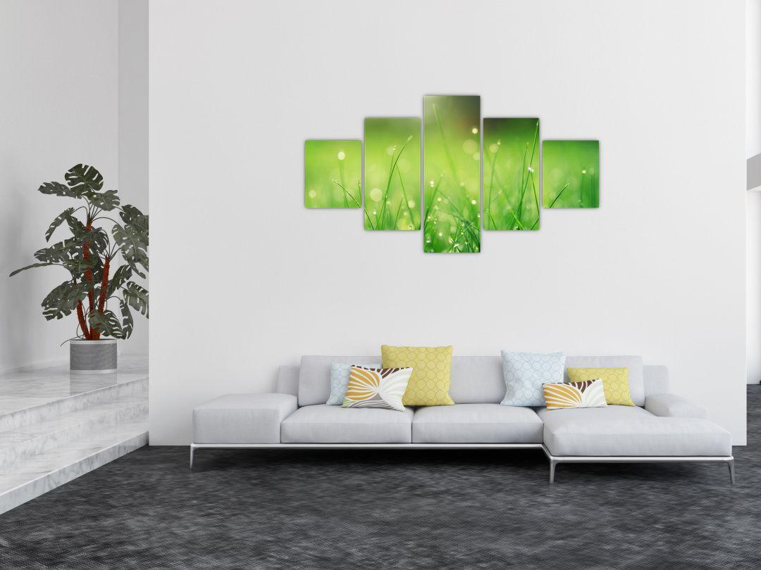 Obraz - rosa na trávě (V020169V12570)