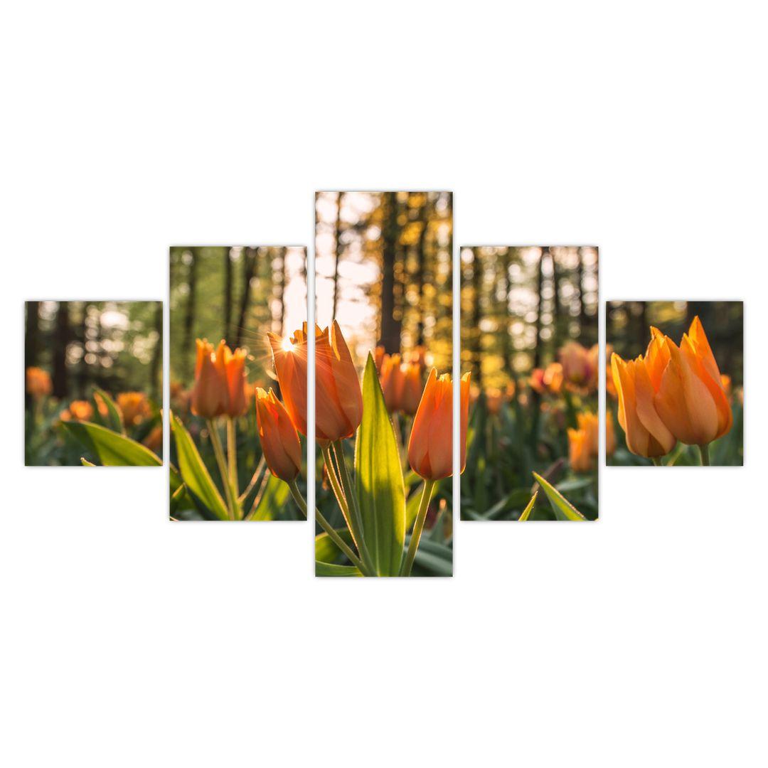 Obraz - kvety tulipánov (V020195V12570)