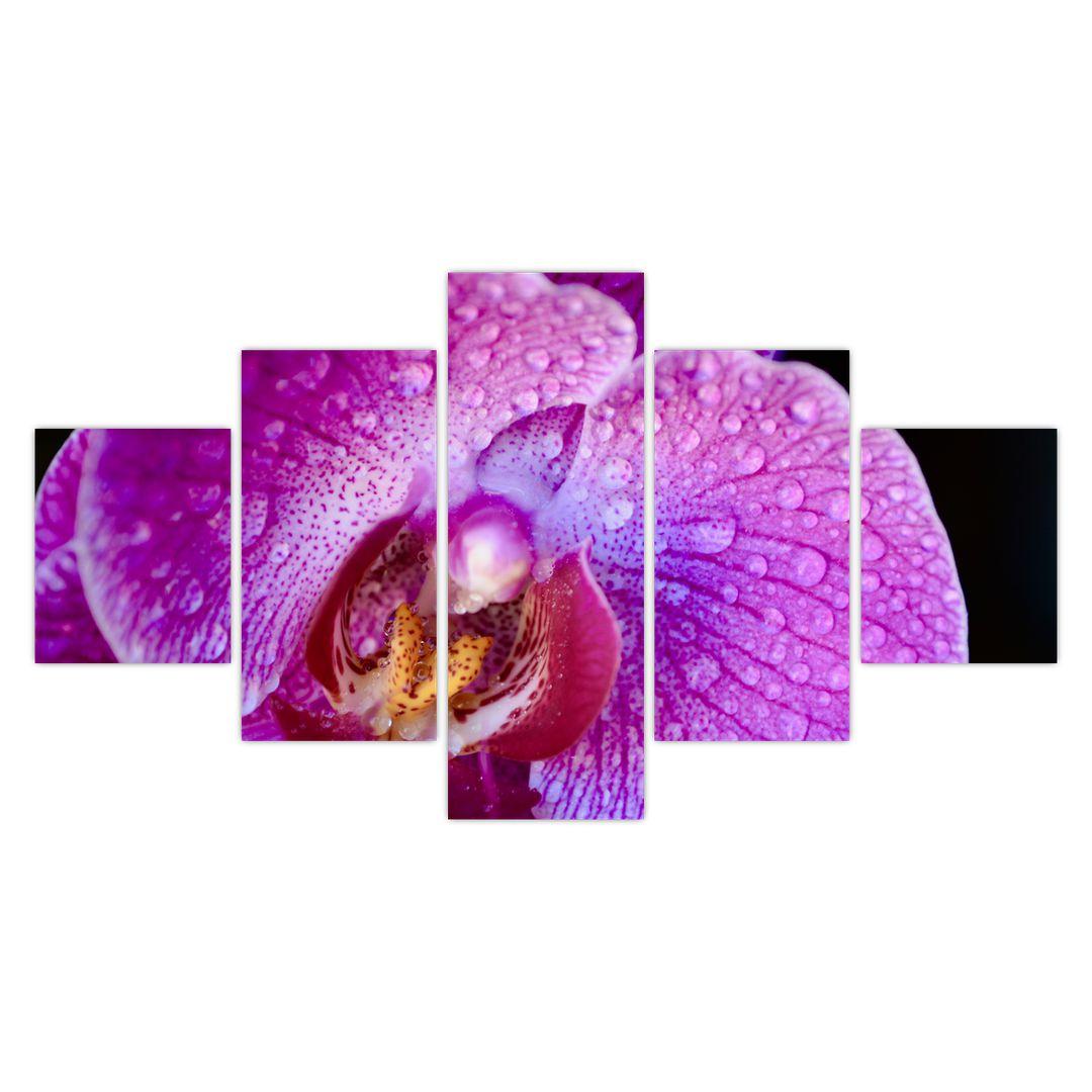 Detailní obraz květu orchideje (V020314V12570)