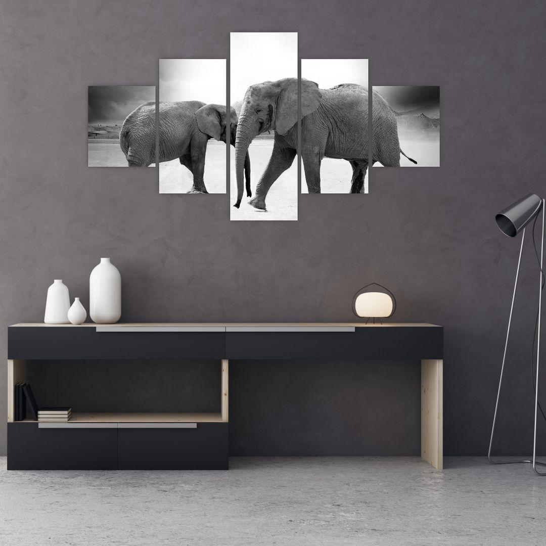 Obraz - černobílí sloni (V020398V12570)