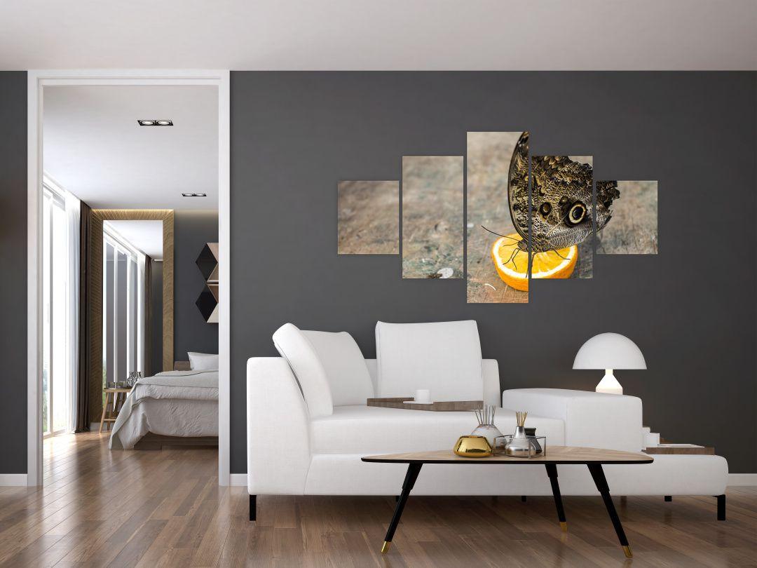 Obraz motýla (V020454V12570)