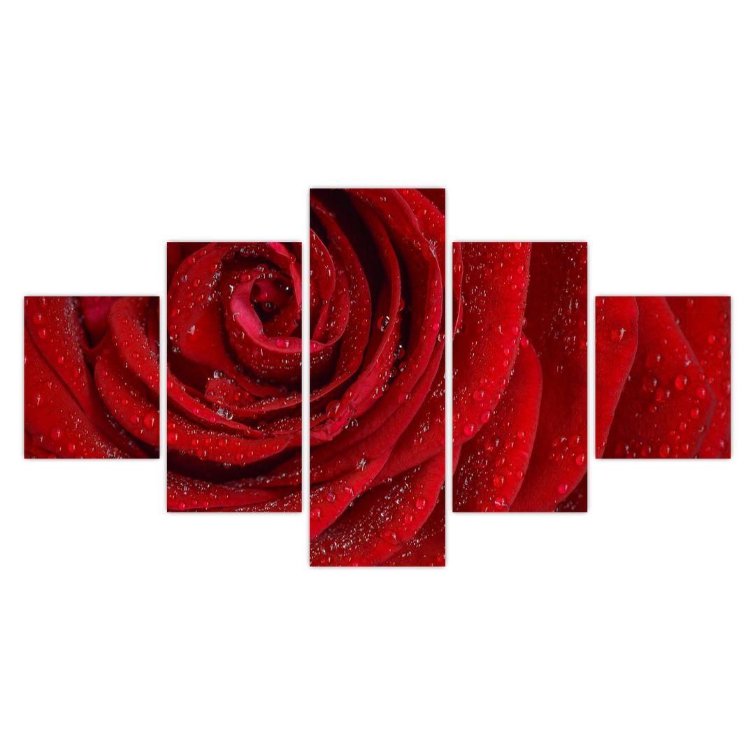 Obraz - detail růže (V020684V12570)