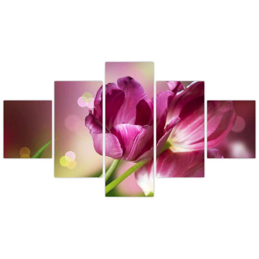 Obraz růžových tulipánů (V020887V12570)