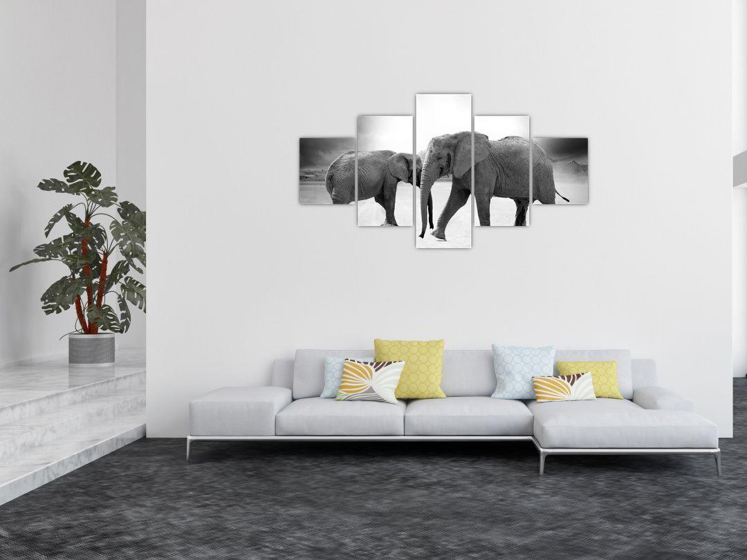 Obraz slonů (V020900V12570)