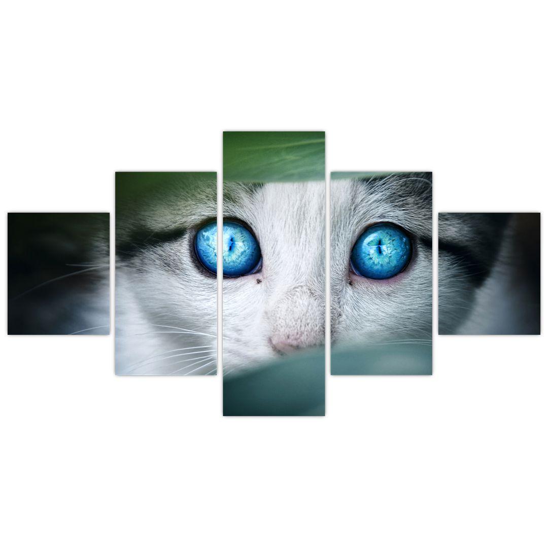 Obraz kočky (V020944V12570)