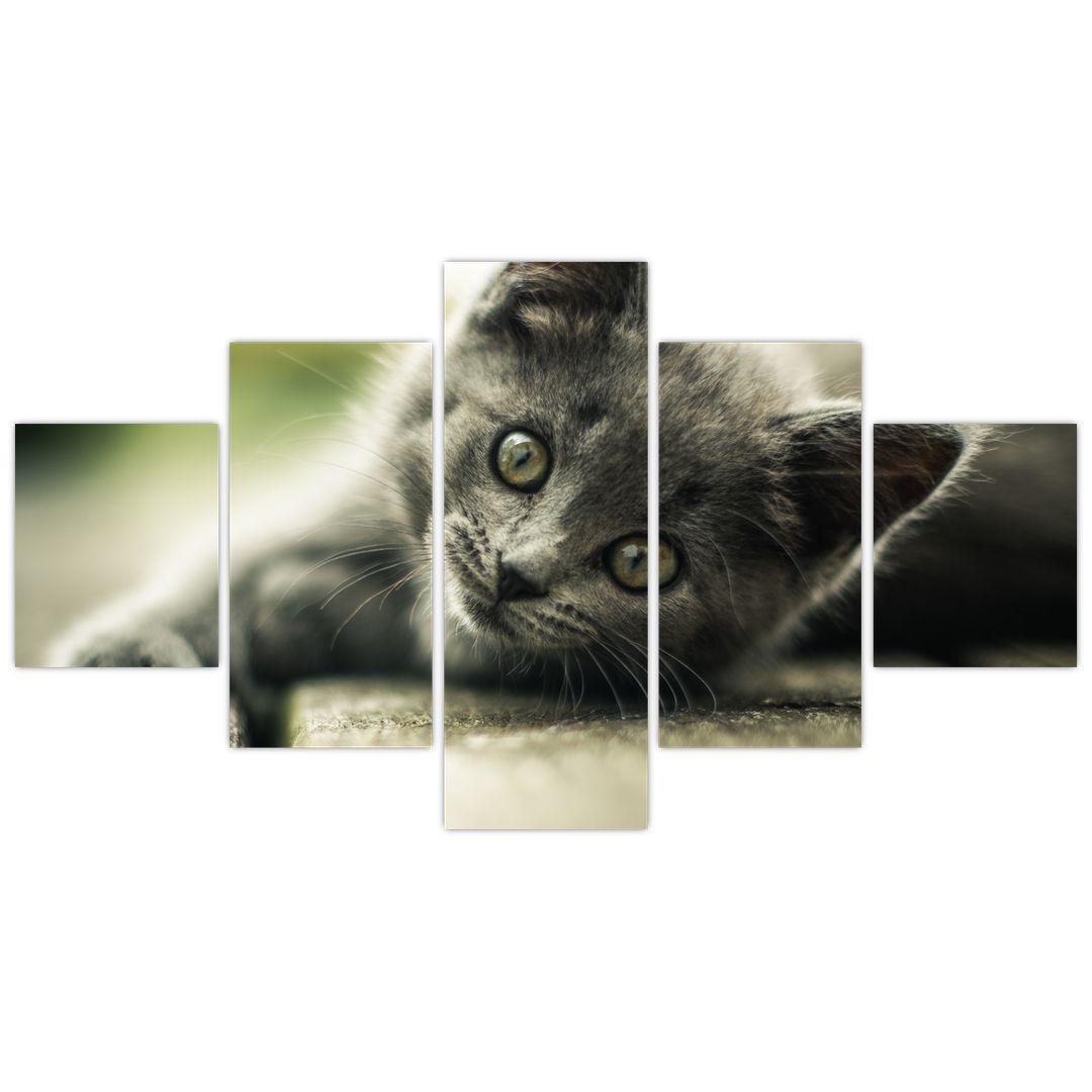 Obraz kotěte (V020957V12570)