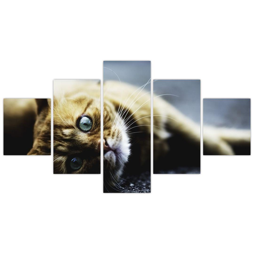 Obraz kočky (V020963V12570)