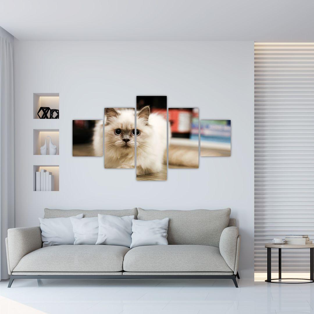 Obraz bílé kočky (V021124V12570)