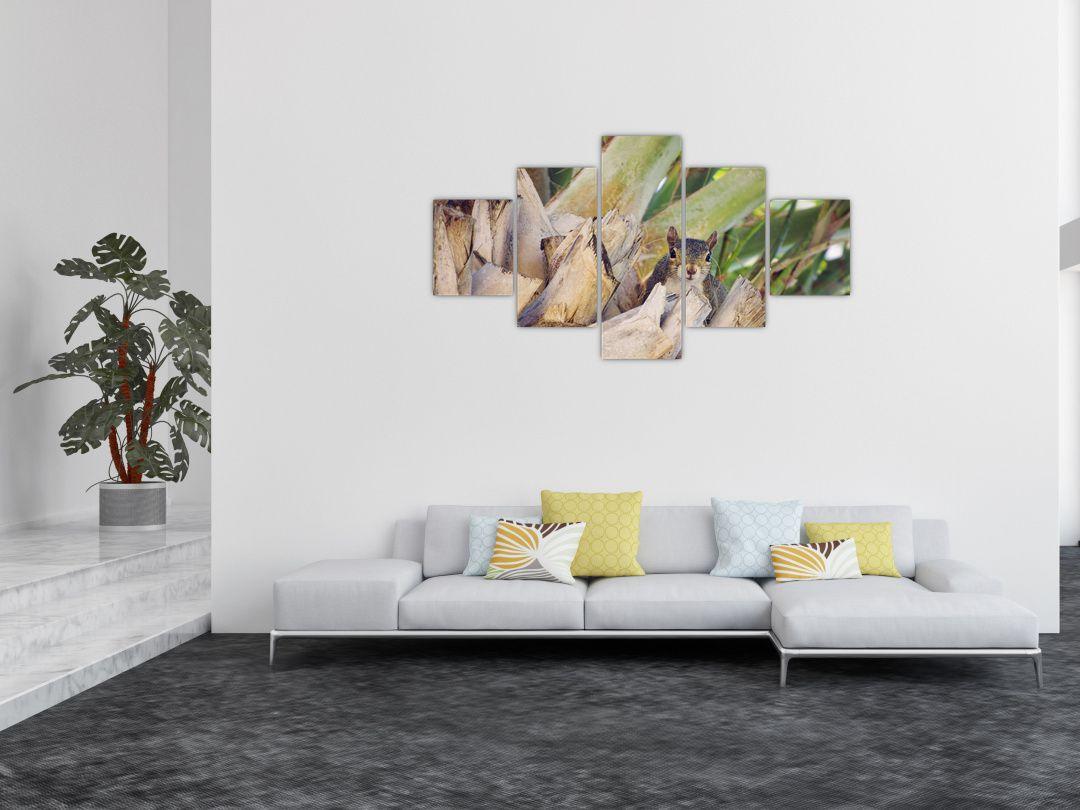 Obraz veverky na stromu (V021177V12570)