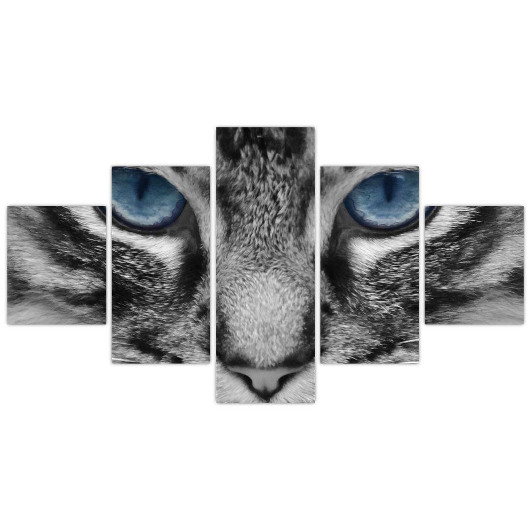 Obraz kočky (V021221V12570)