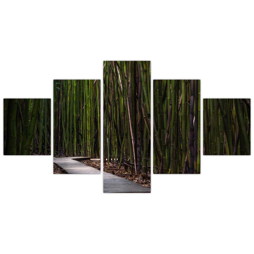 Obraz - Medzi bambusy (V021324V12570)