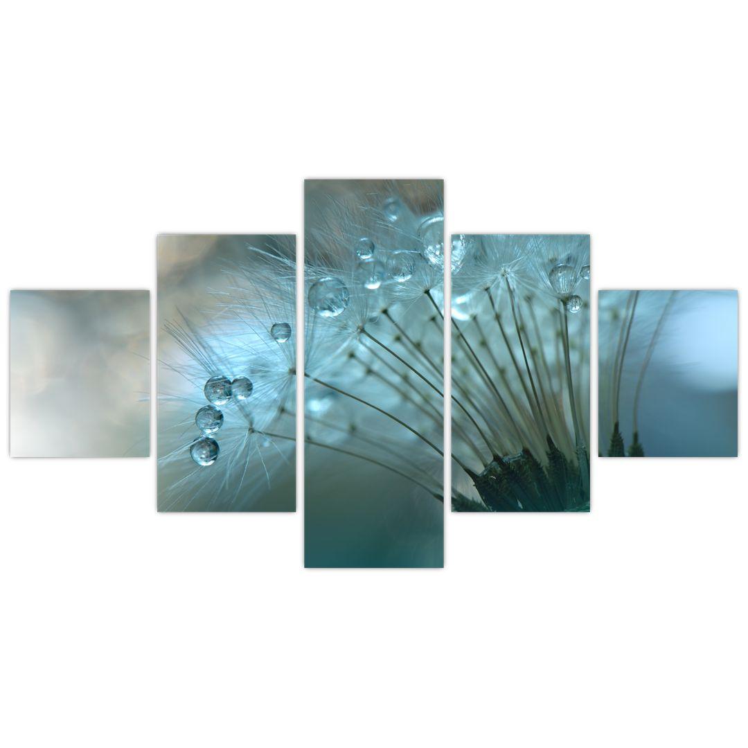 Obraz - Pampeliška - petrolej (V021451V12570)