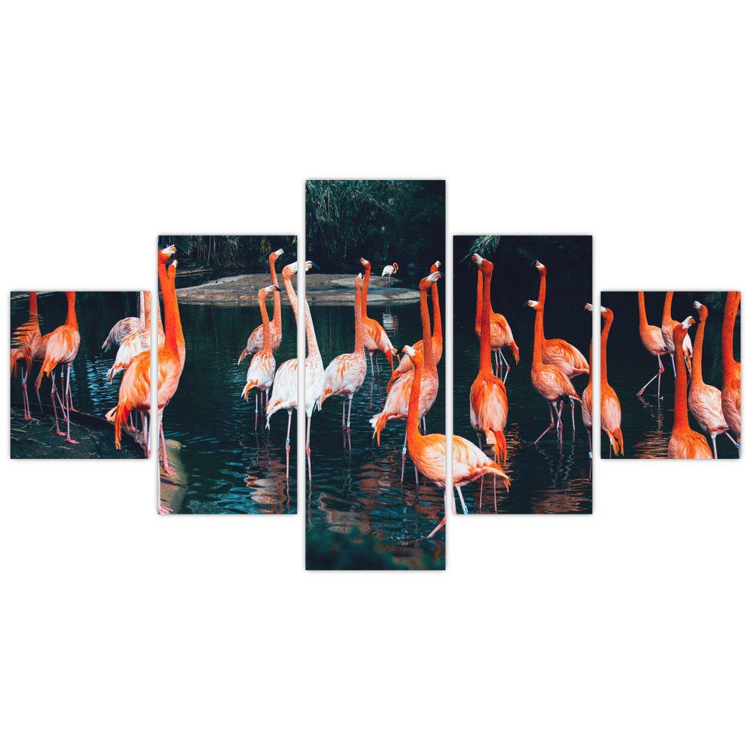 Obraz stáda plameňáků (V021626V12570)