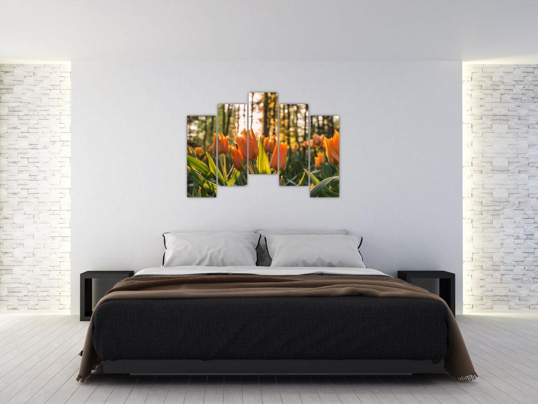 Obraz - kvety tulipánov (V020195V12590)
