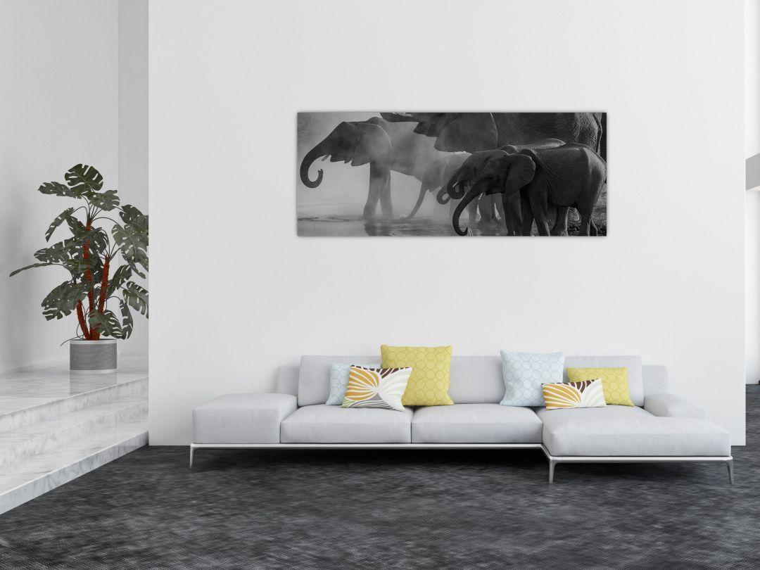 Obraz slonů - černobílý (V021575V14558)