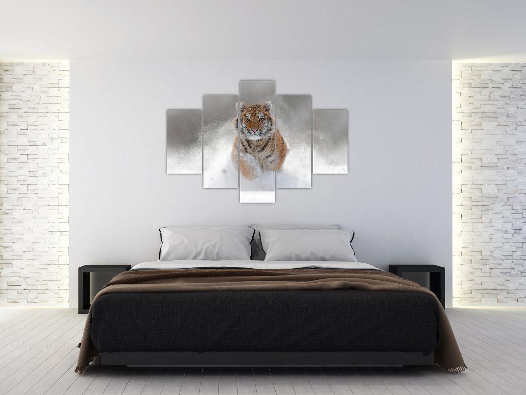 Obraz bežiaceho tigra v snehu (V020719V150105)