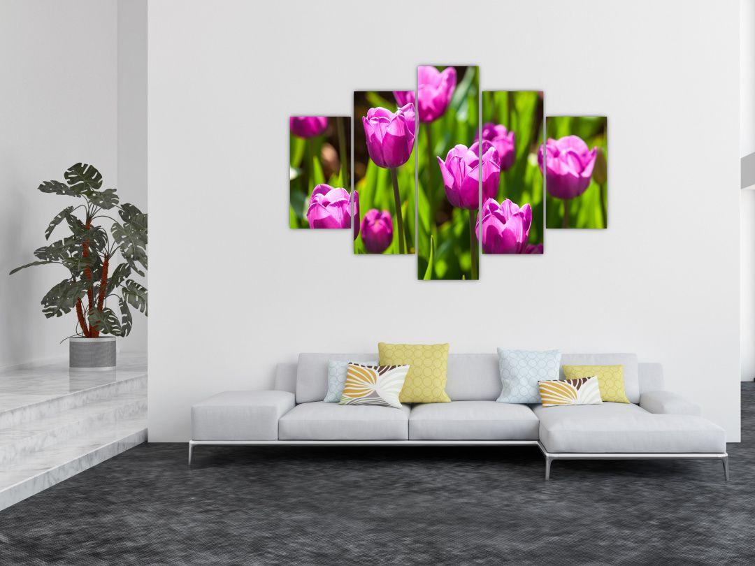 Obraz tulipánov na lúke (V020893V150105)
