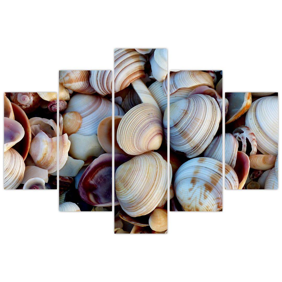 Kagyló képe (V021131V150105)