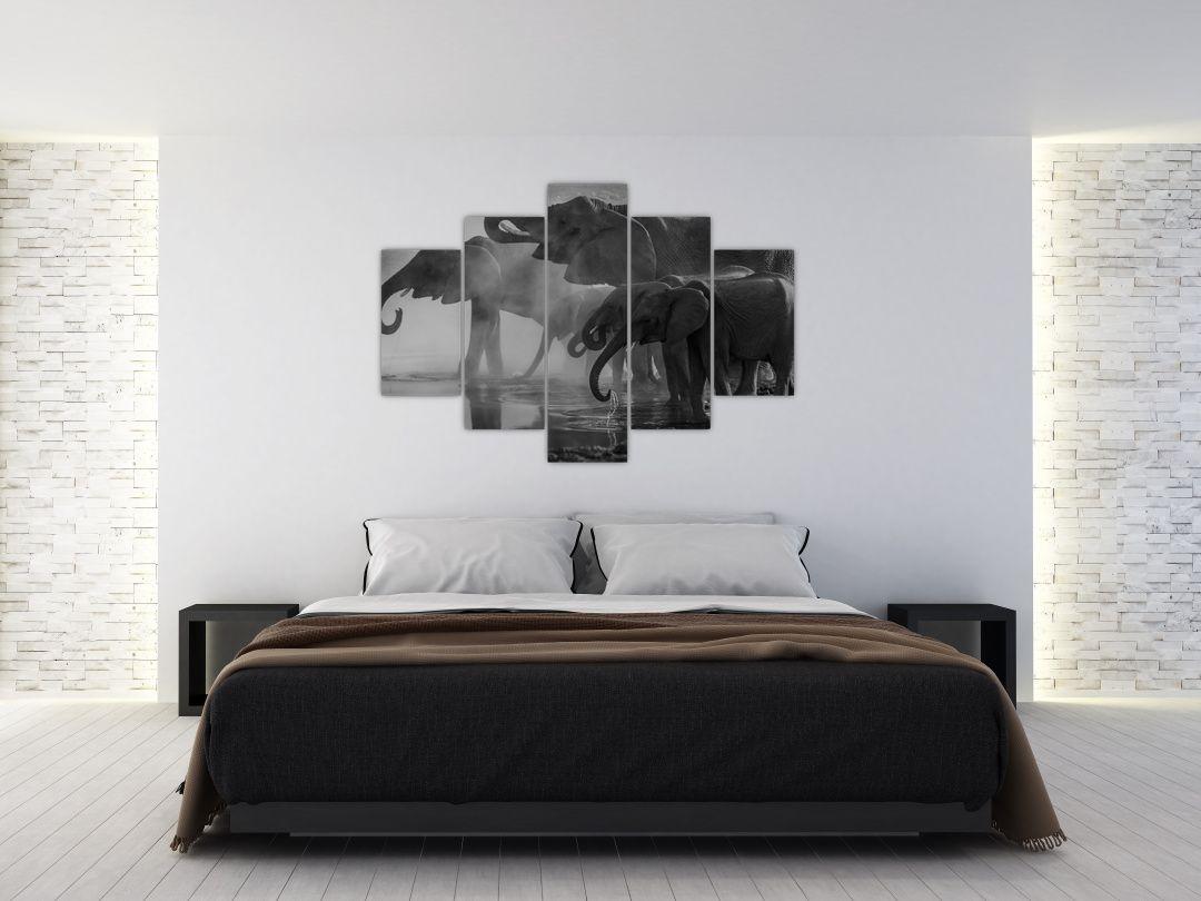 Obraz slonů - černobílý (V021575V150105)