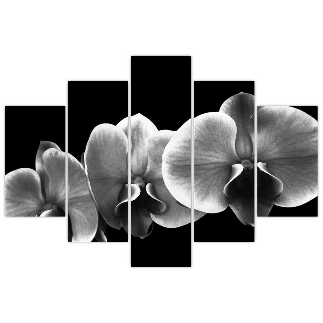 Obraz květu orchideje (V022015V150105)