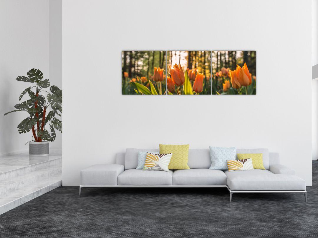 Obraz - kvety tulipánov (V020195V15050)