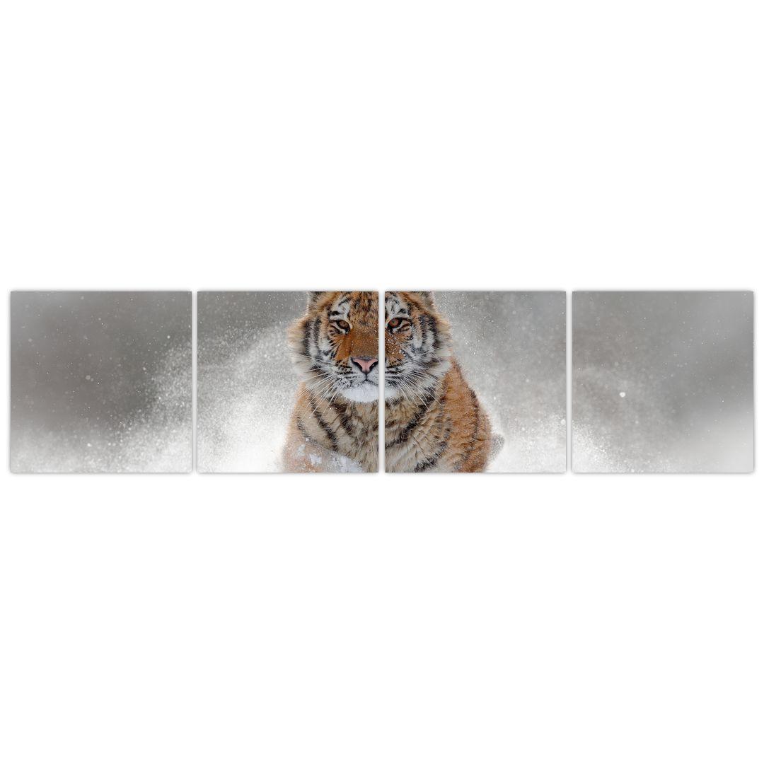 Obraz běžícího tygra ve sněhu (V020719V16040)