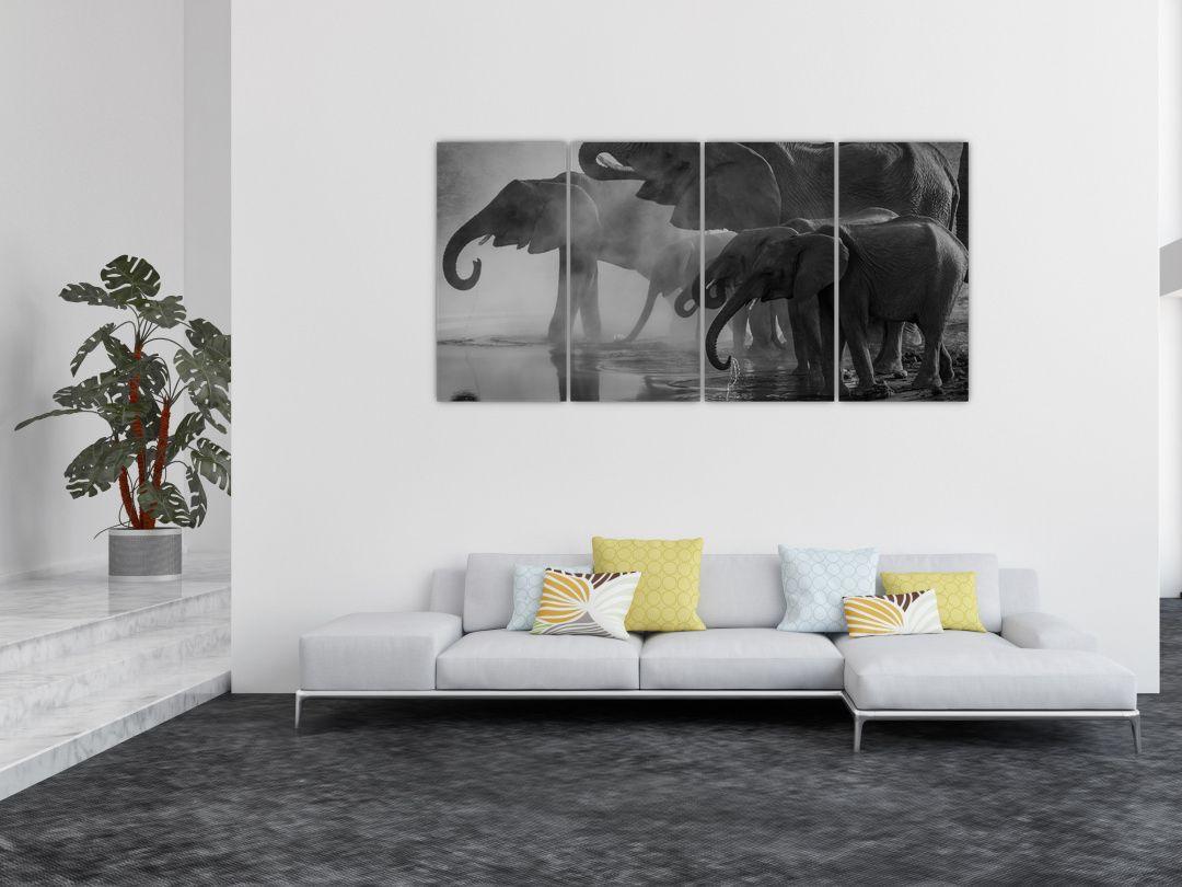 Obraz slonů - černobílý (V021575V16080)