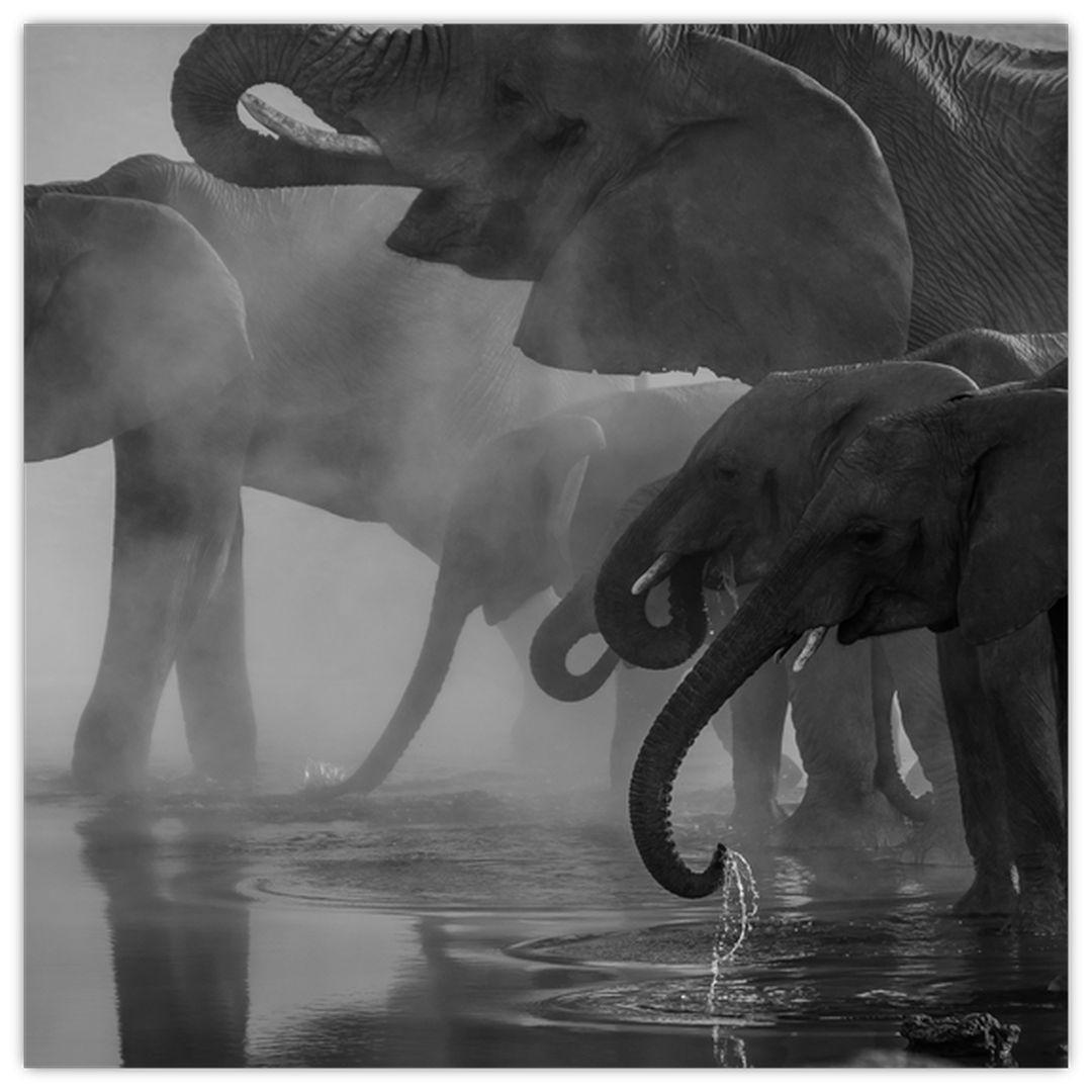 Obraz slonů - černobílý (V021575V3030)