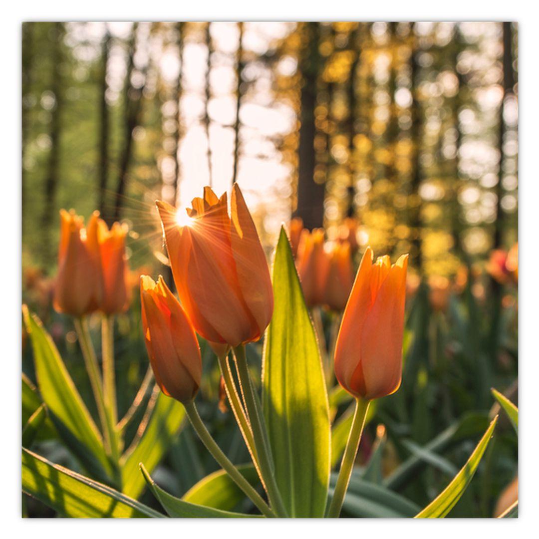 Obraz - kvety tulipánov (V020195V5050)