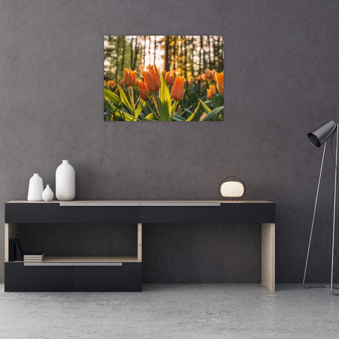 Obraz - oranžové tulipány (V020552V7050)