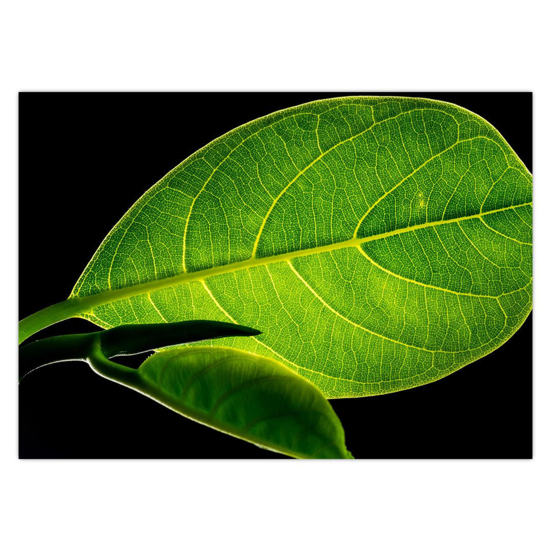 Obraz - zelený list (V020628V7050)