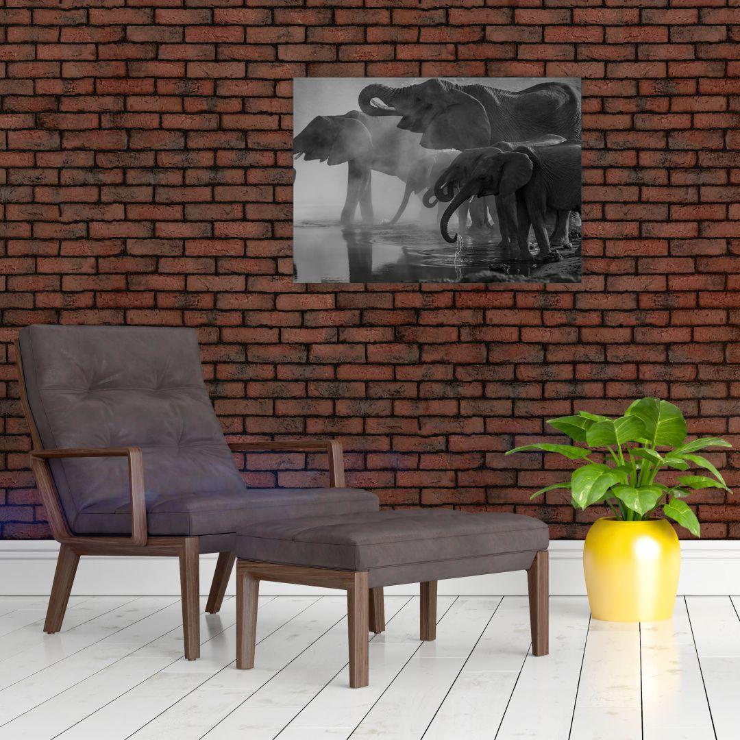 Obraz slonů - černobílý (V021575V7050)
