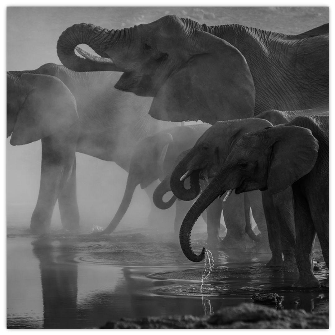 Obraz slonů - černobílý (V021575V7070)