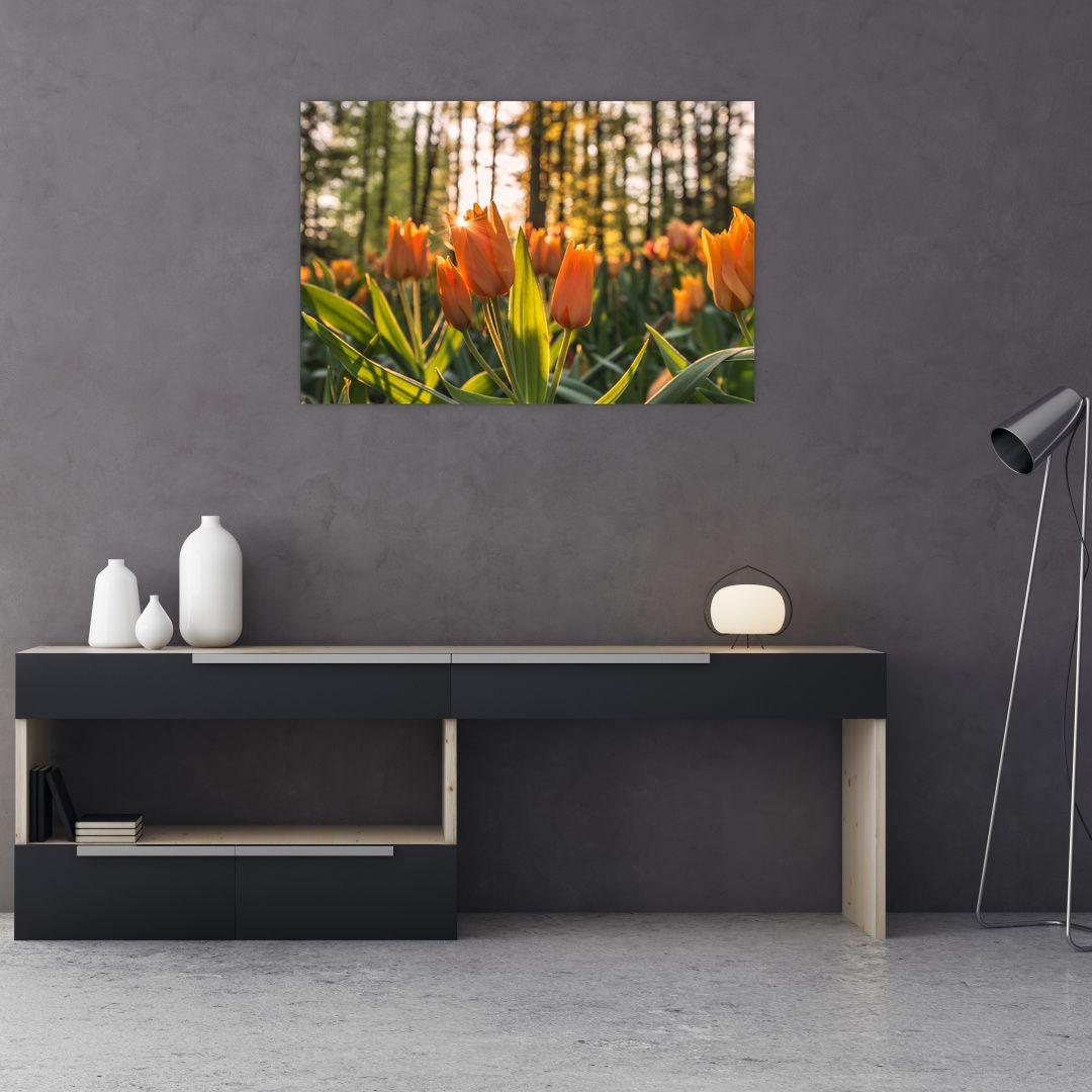 Obraz - kvety tulipánov (V020195V9060)